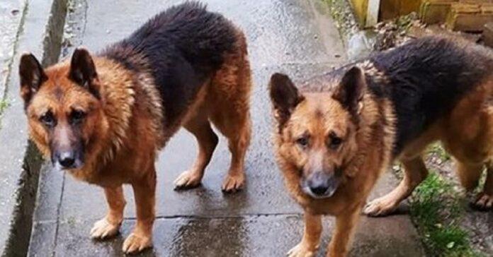 i-cani-delluomo-malato-di-tumore-cercano-disperatamente-casa