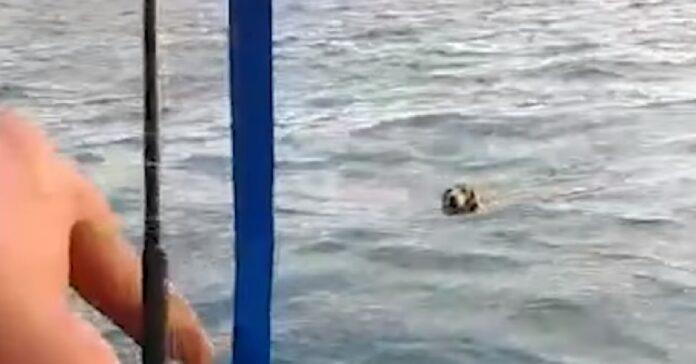 il-cane-e-disperatamente-in-balia-del-mare-dei-pescatori-lo-salvano