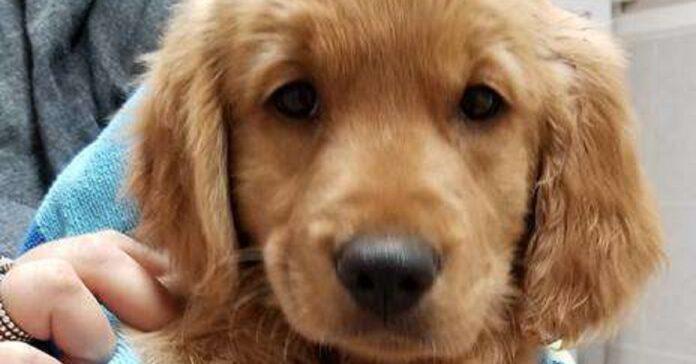 il-cane-gravemente-malato-viene-abbandonato-al-proprio-destino
