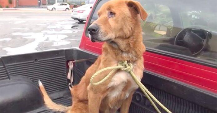 il-cane-perde-completamente-la-fiducia-nellumanita-dopo-labbandono