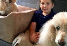 il-cane-prima-di-spegnersi-regala-un-ultimo-sorriso-al-suo-proprietario
