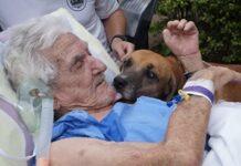 il-cane-restituisce-la-felicita-al-proprietario-con-una-semplice-visita
