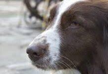 il-cane-riposa-affianco-al-povero-proprietario-in-fin-di-vita