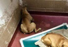 il-cane-viene-salvato-ma-e-traumatizzato-dalla-vita-di-strada