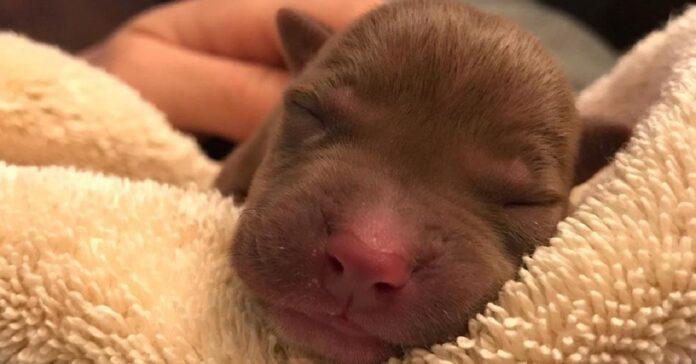 il-cucciolo-rischia-la-vita-ma-un-massaggio-cardiaco-evita-la-tragedia