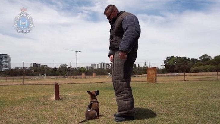 Il cucciolo affronta con entusiasmo il suo primo giorno di addestramento