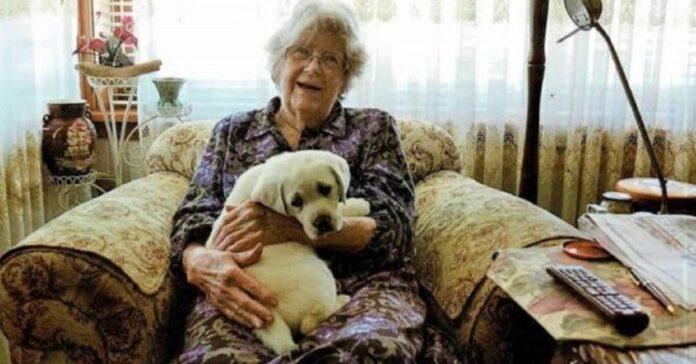 lascia-1-milione-di-dollari-come-eredita-per-aiutare-i-cani-guida
