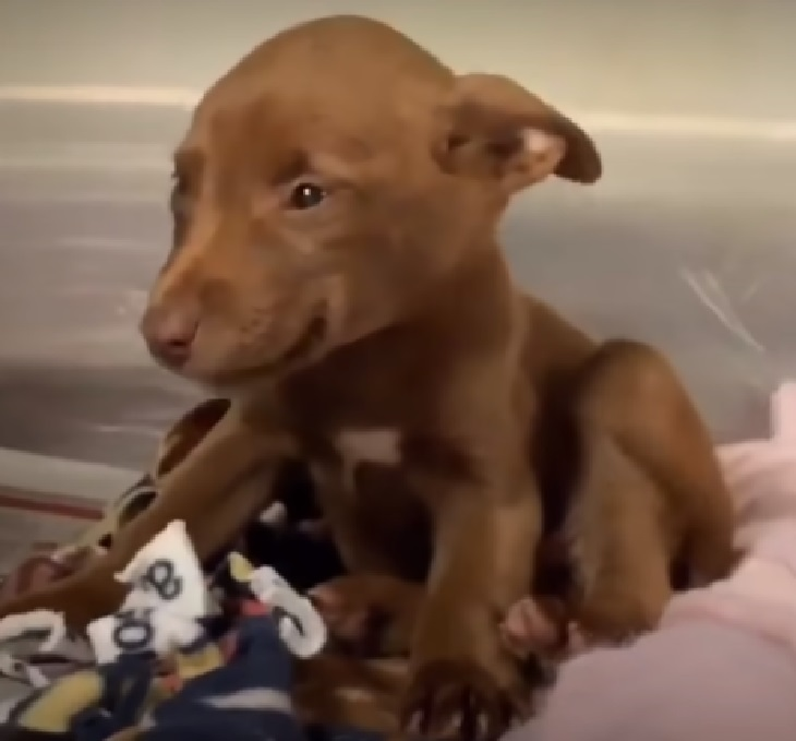Il cucciolo dal sorriso stampato trova finalmente casa