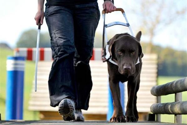 portare il cane al guinzaglio