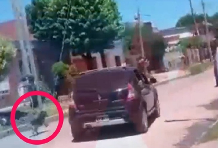 Cacciano il cane fuori dall'auto per abbandonarlo nel modo più crudele