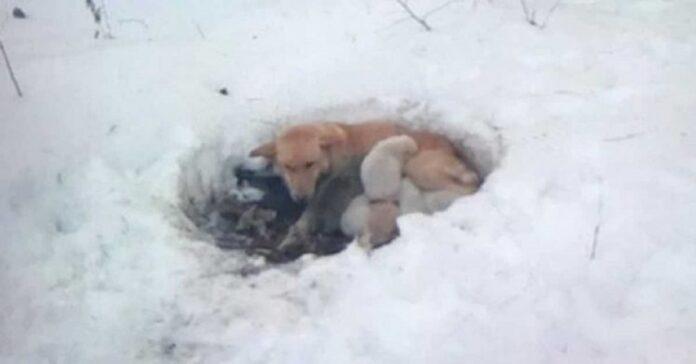 mamma-cane-e-disposta-a-tutto-pur-di-proteggere-i-suoi-cuccioli-dal-freddo