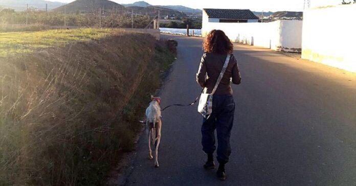 mamma-cane-salva-i-suoi-cuccioli-nonostante-la-zampa-fratturata