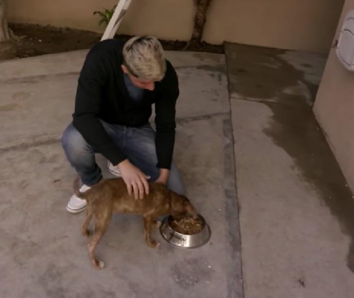 Cane salvato furtivamente dalle grinfie della proprietaria durante la notte