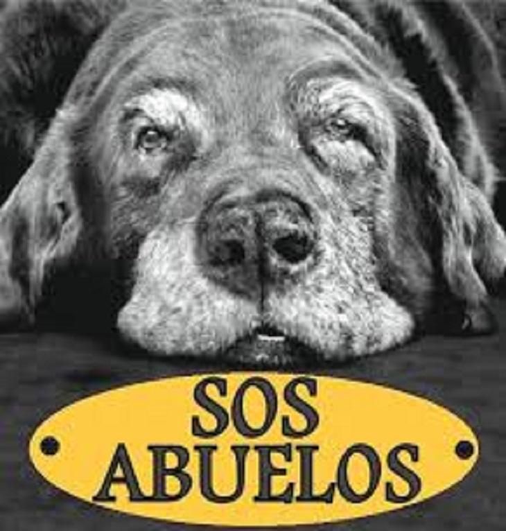 I cani dell'uomo malato di tumore cercano disperatamente casa