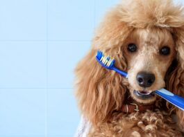 cane con spazzolino tra i denti