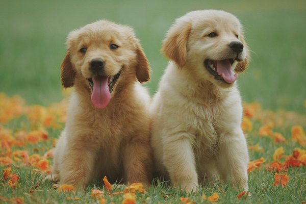Quanti denti ha un cane? E come si chiamano?
