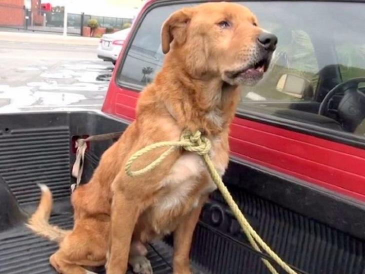 Il cane perde completamente la fiducia nell'umanità dopo l'abbandono
