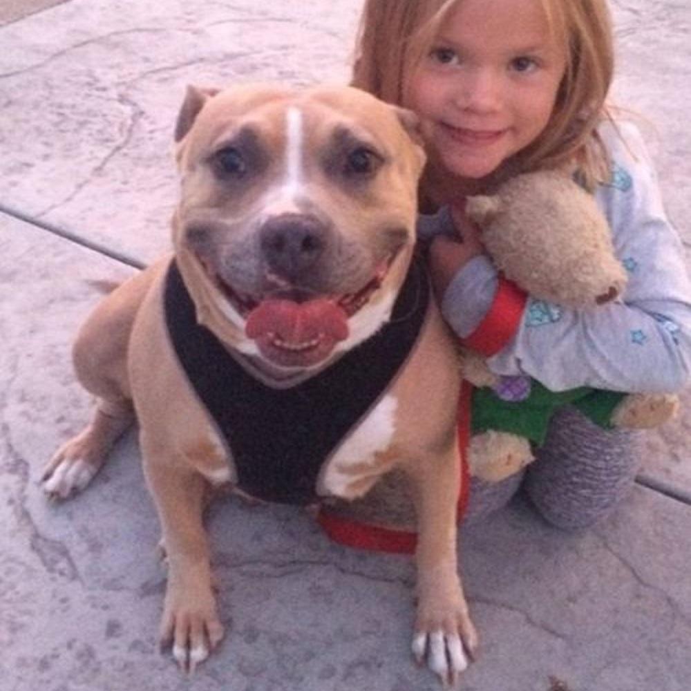 Il cane riesce a trovare casa grazie al suo sorriso smagliante