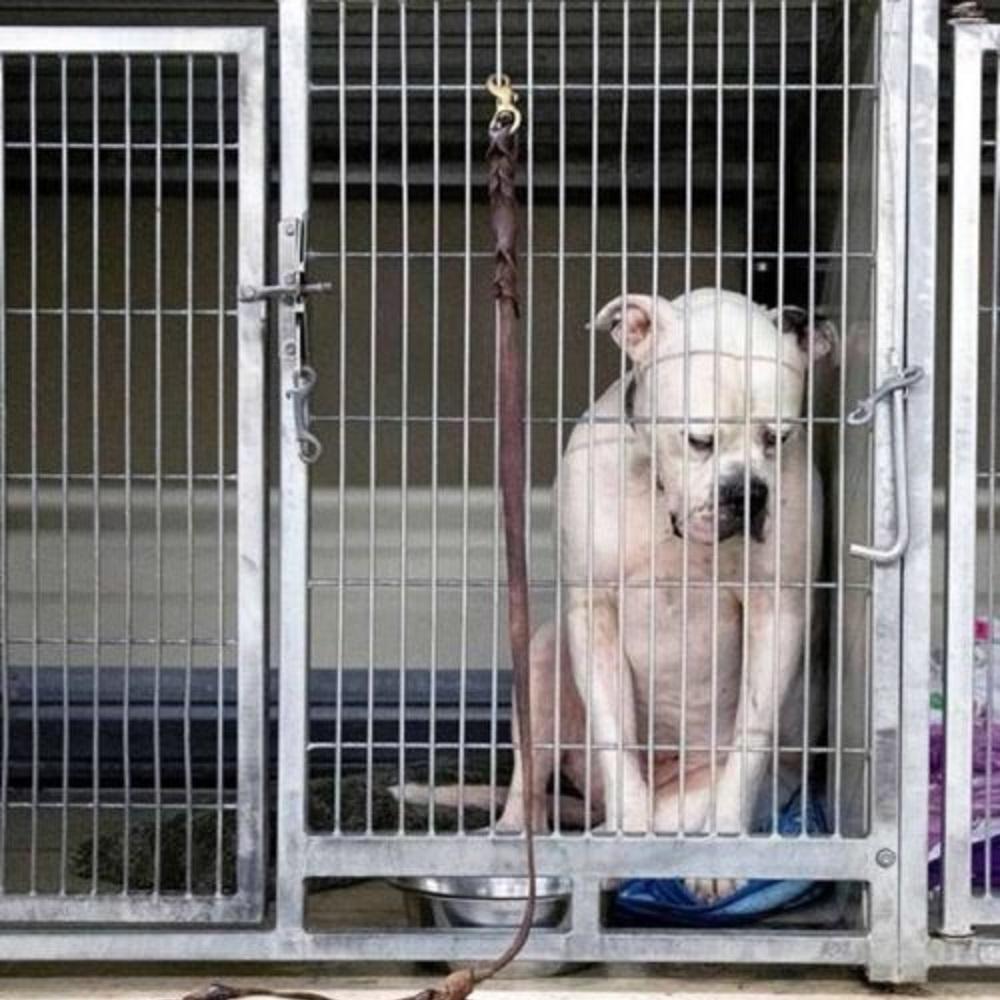 Il cane viene abbandonato perché la famiglia perde la casa