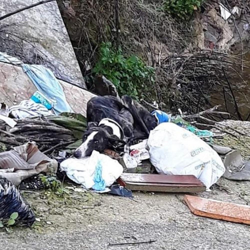 Cane stanco ed affamato viene trovato e salvato da una fine ignobile