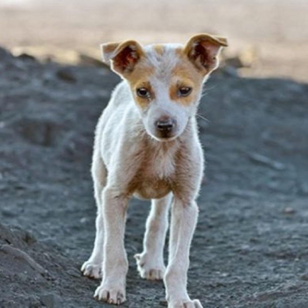 senzatetto-cane