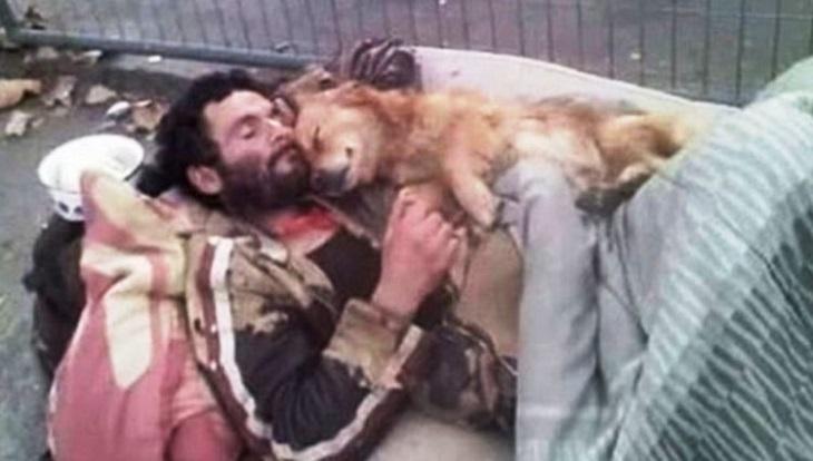 il-cane-dorme-abbracciato-al-suo-amico-limmagine-commuove-la-rete