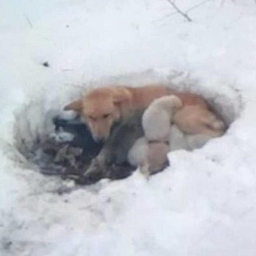 Mamma cane è disposta a tutto pur di proteggere i suoi cuccioli dal freddo