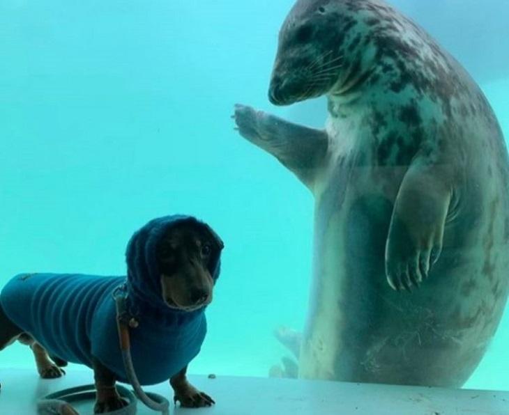 Un cane ed una foca stringono amicizia al primo incontro