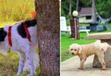 cane defeca in giardino