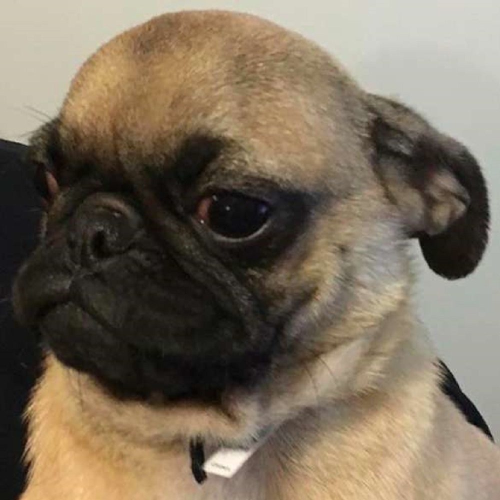 terrell-cane