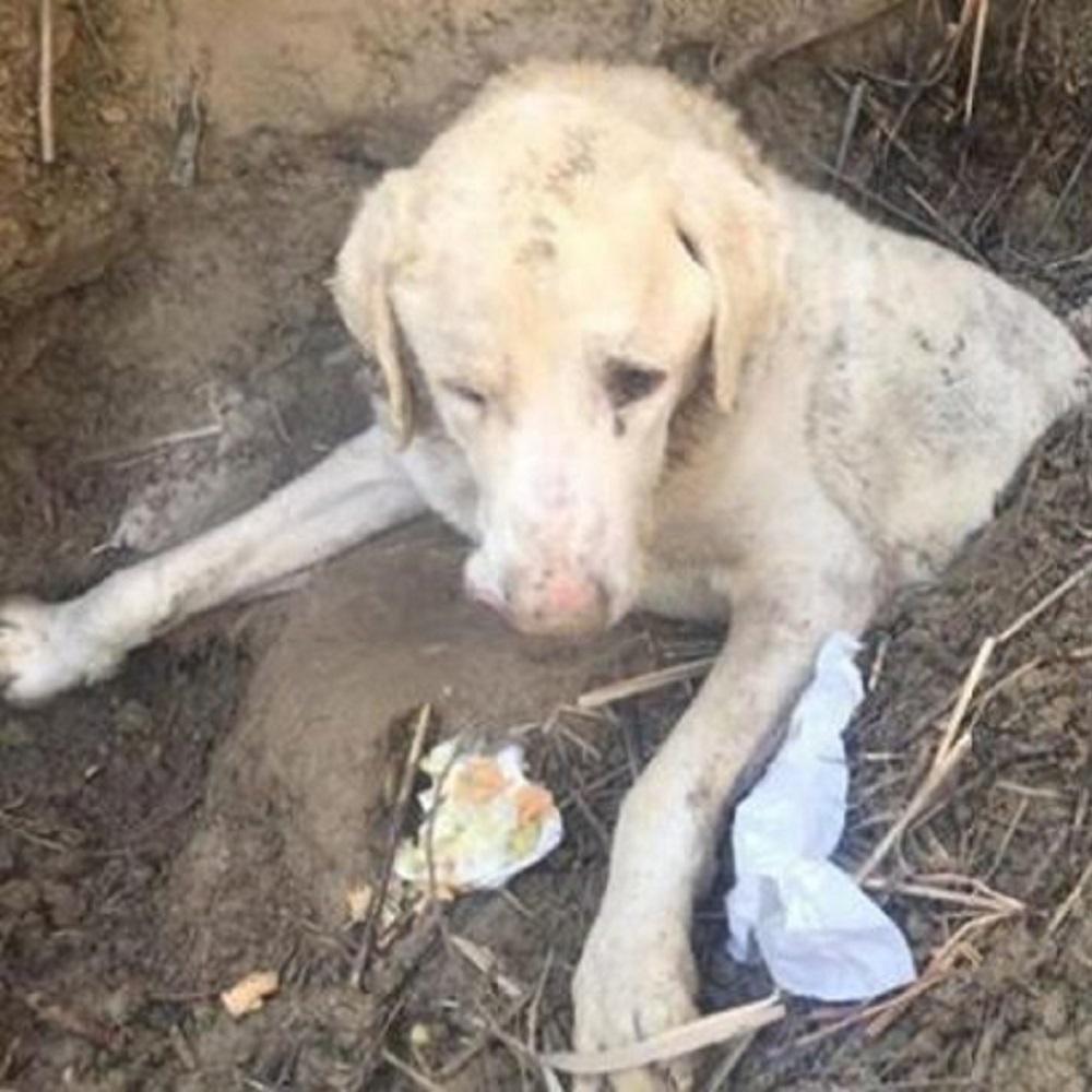 Il cane viene abbandonato in un fosso ma lui lotta per sopravvivere