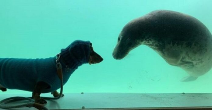 un-cane-ed-una-foca-stringono-amicizia-al-primo-incontro