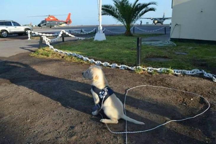 Cane abbandonato per strada diventa membro della marina cilena