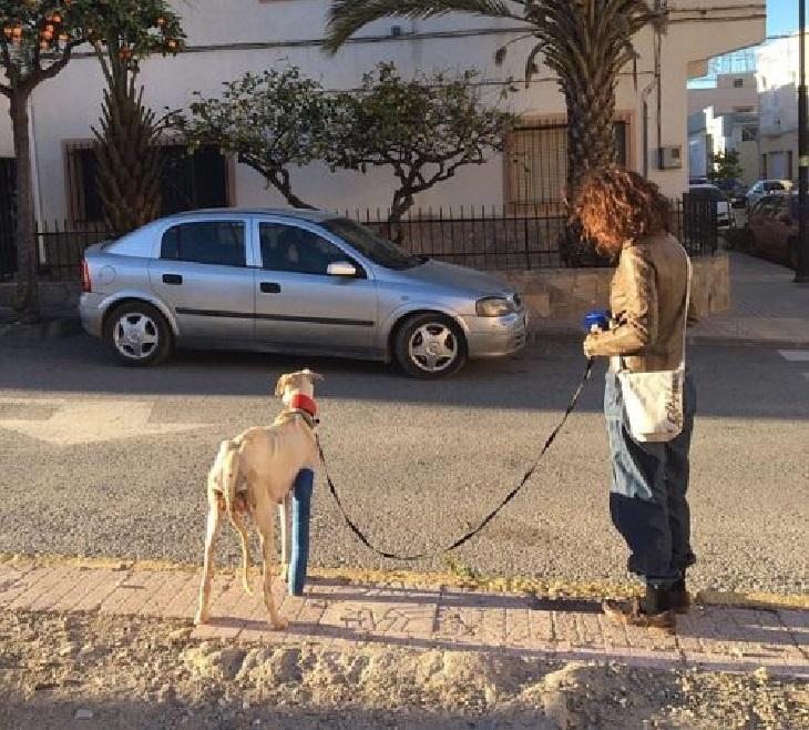 Mamma cane salva i suoi cuccioli nonostante la zampa fratturata