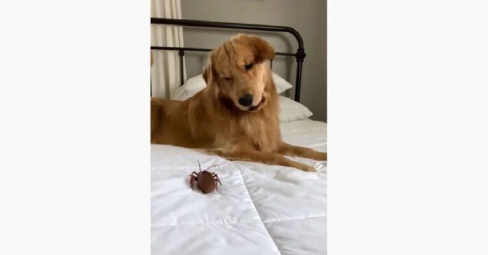 cane e scarafaggio finto su letto
