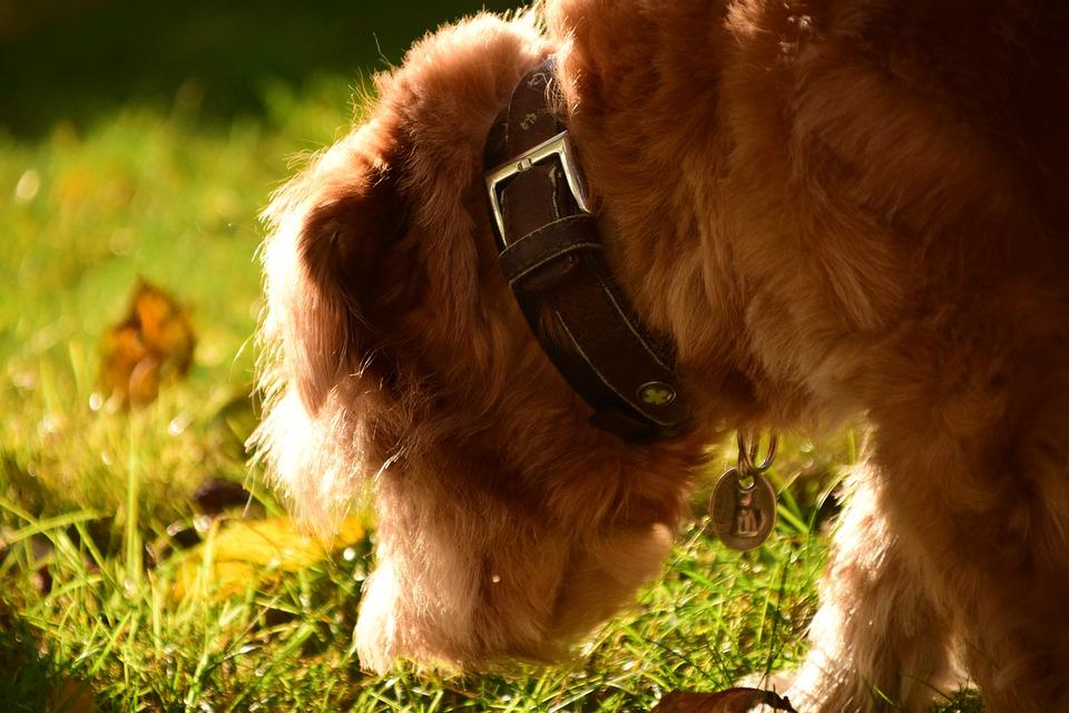 cane che esplora