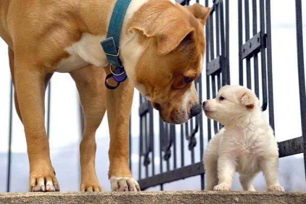 Cane incontra il nuovo cucciolo: la reazione è tenerissima - VIDEO