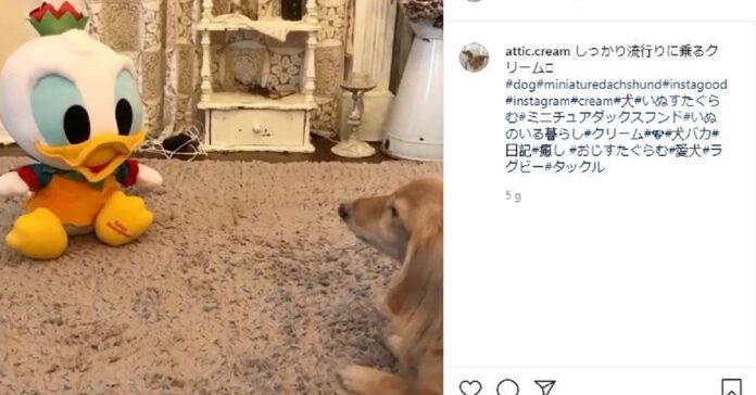 cane contro paperino su instagram