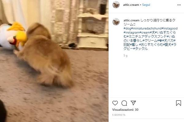 Cane lotta contro Paperino: l'assalto è tutto da ridere - VIDEO