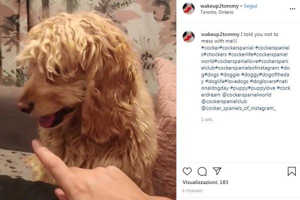 Cane non vuole essere toccato: la lamentala è tenerissima – VIDEO