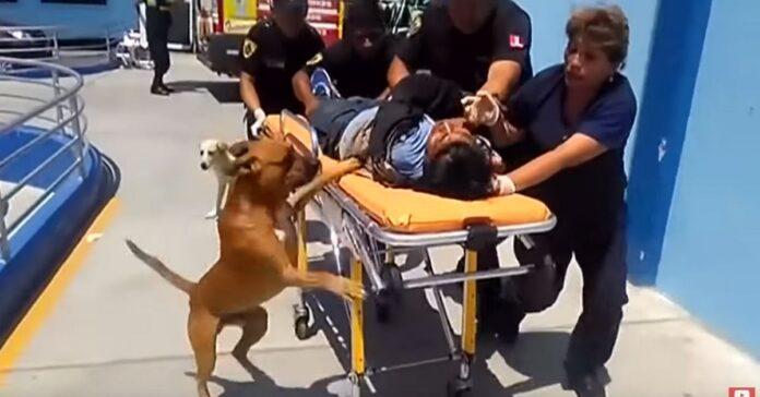cane segue il suo padrone che sta male in ambulanza