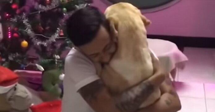 ragazzo abbraccia cane dopo un'operazione