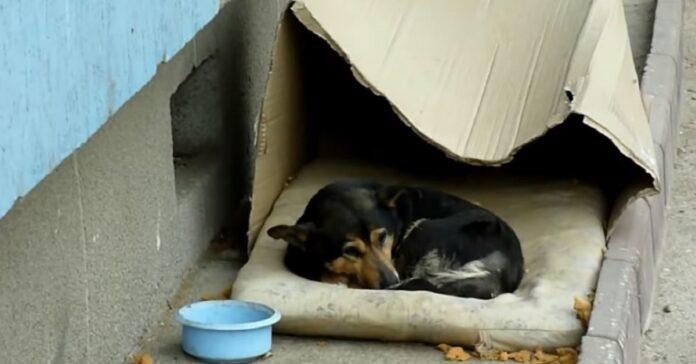cane dentro una scatola di cartone