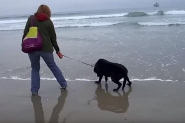 cane in spiaggia per la prima volta