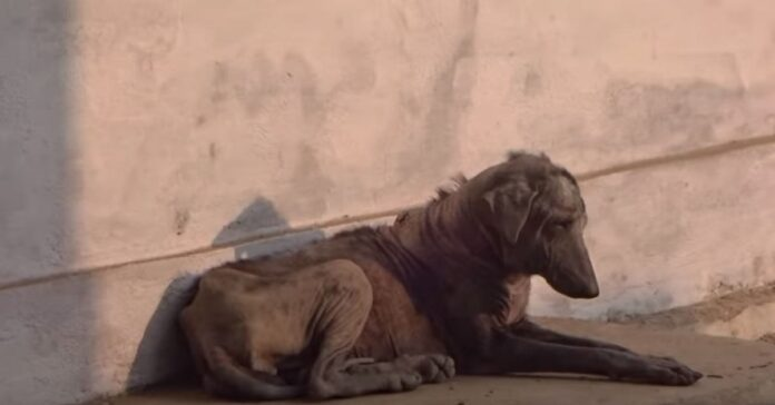cane denutrito e malato