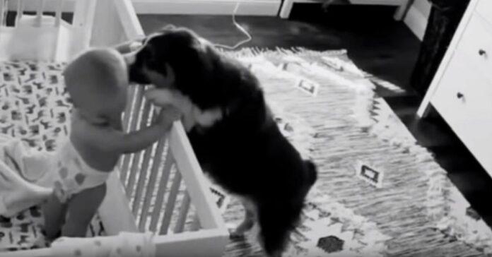 cane fa divertire bambino in culla
