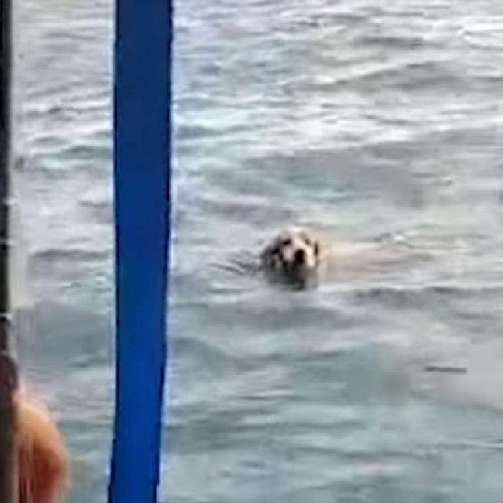 Il cane è disperatamente in balia del mare, dei pescatori lo salvano