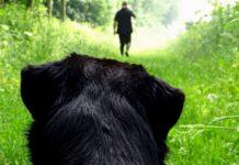 cane guarda uomo andare via