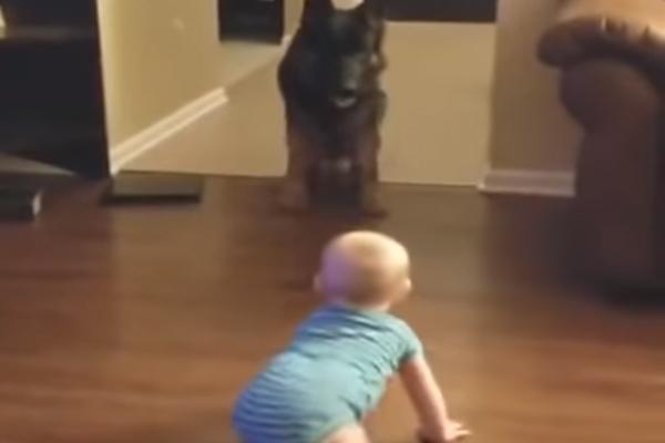 Cucciolo di Pastore Tedesco gioca con un bambino: il video è virale
