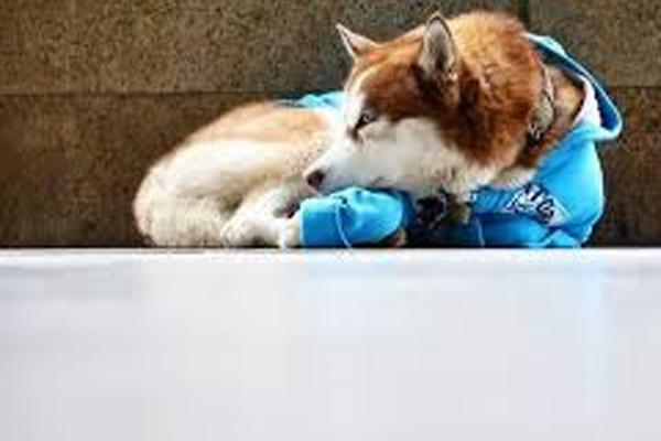 Hachiko russo, il cane che attende ogni giorno la sua proprietaria